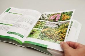 Foerster-Stauden Kompendium